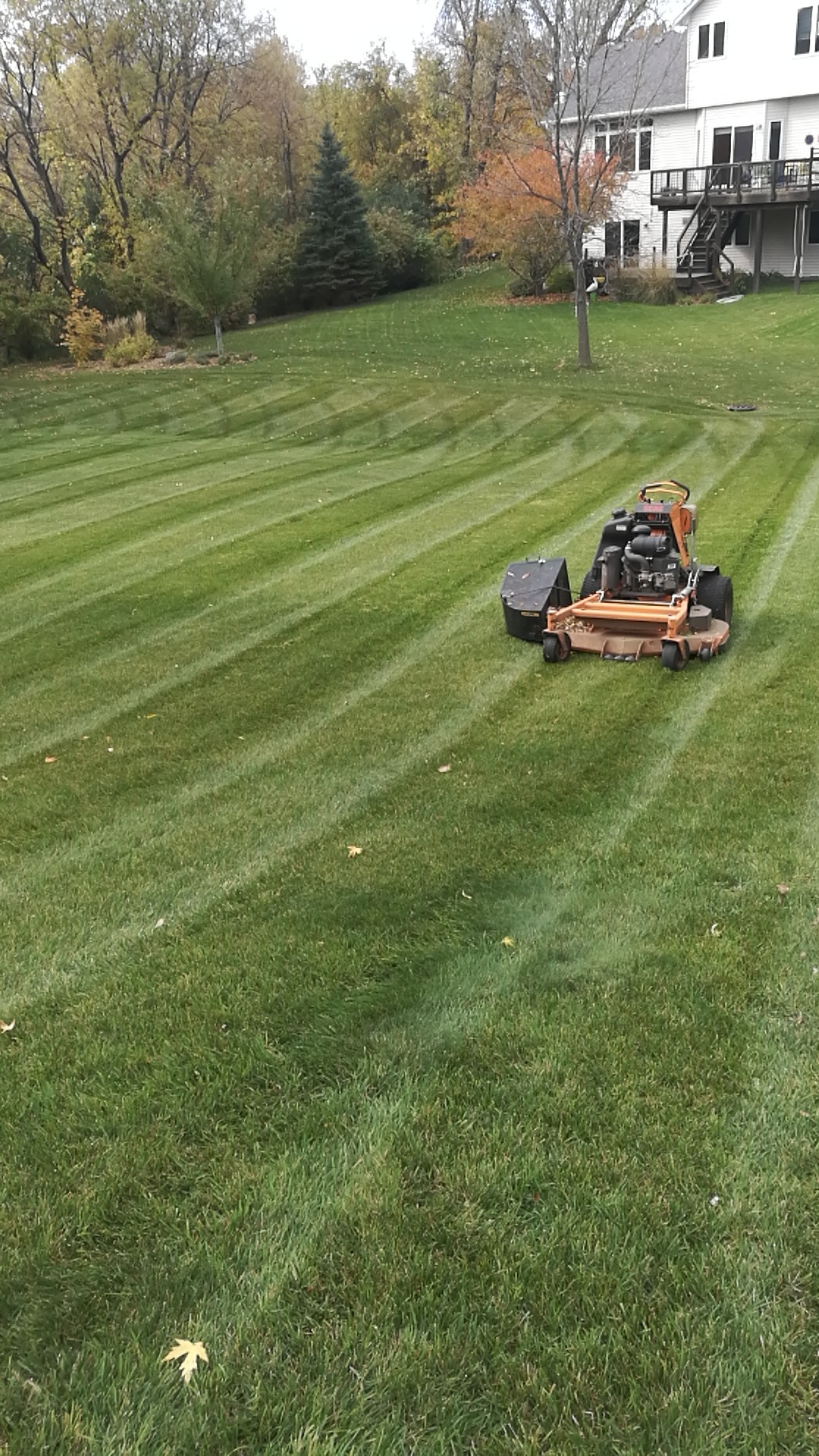 fall clean-up lawn care